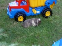 Unser Garten = Spielplatz und Meerschweinchenauslauf in Einem