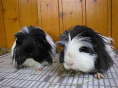 Geronimo&Gordon2007