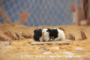 Die Babys von Sonja / Milchschnäuzchen