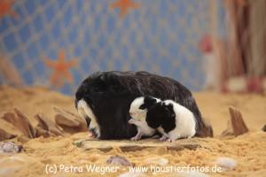 Sonja / Milchschnäuzchen mit Babys