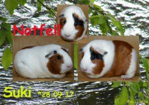 Suki 11-08-18