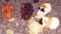 die ersten Meeris (Jerry, Daisy, Bony, Ricky)