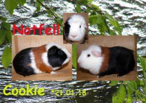 Cookie 30-11-18